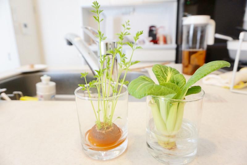 再生野菜画像